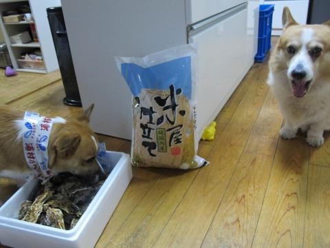 牡蠣と米と犬