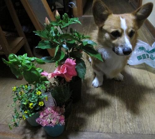 ヨネヤマプランテーションで買った花