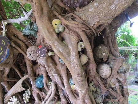 波照間島 モンパの木