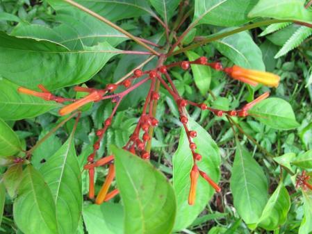石垣島 南国の植物