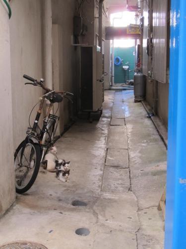 石垣島のにゃんこ