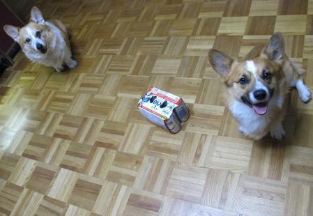 オリオンビールと犬