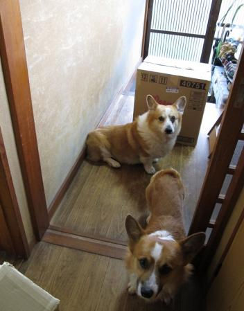 デカい箱と田舎な玄関と犬