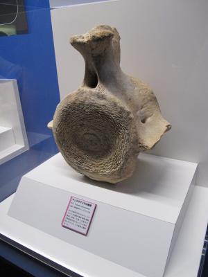 マッコウクジラ背骨