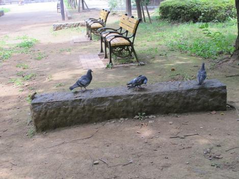 上野公園 鳩