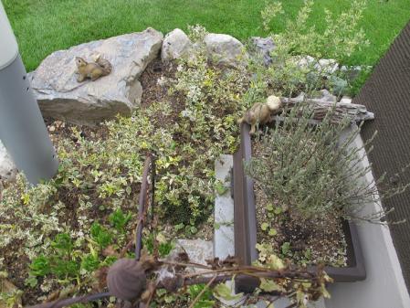 リスの居るお庭