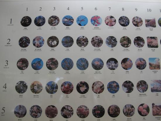 桜のカレンダー