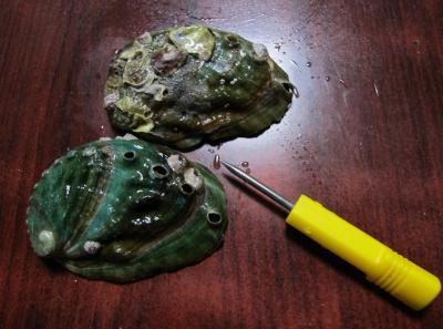 クロアワビの殻