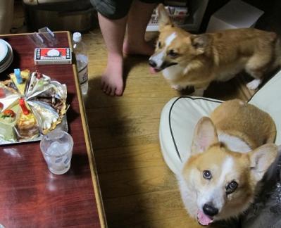 イヌとケーキ
