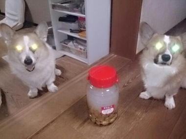 スマホで撮ったら犬の目が!!!