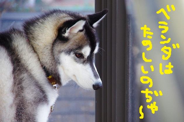 IMGP9000.jpg