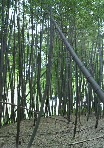 竹1000367