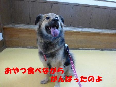 2014_01130022-1.jpg