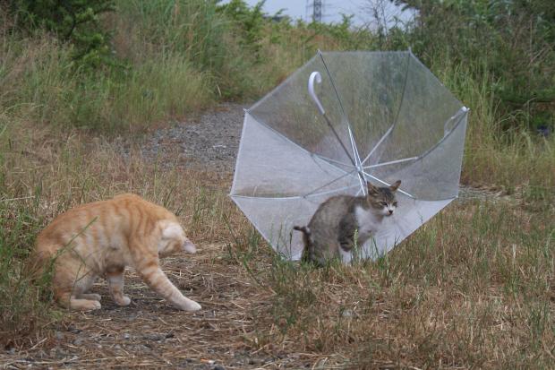 梅雨模様5
