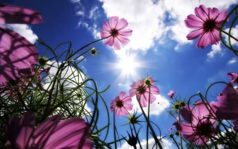 garden-sky-1600x1280-313148_480x300[1]