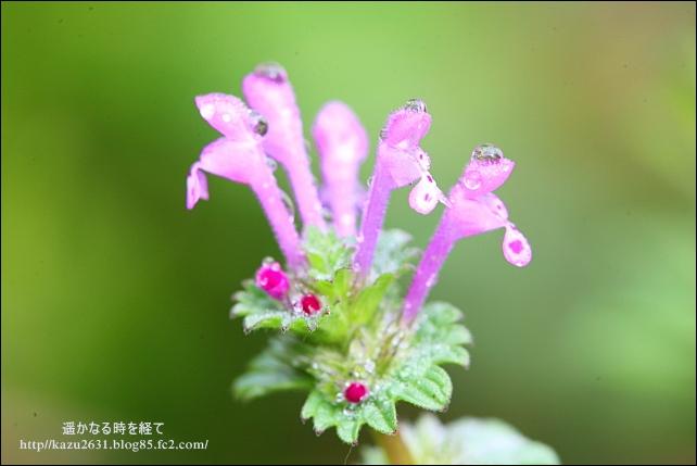 IMG_2643草花