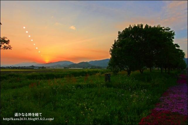 吉野ヶ里公園 芝桜