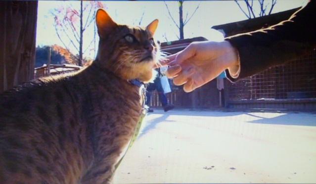 ネコ好きのかしゆかがじゃれていたのは