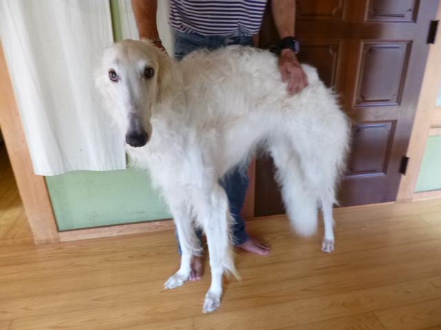 こちら営業部長のLee君 ロシアの猟犬です