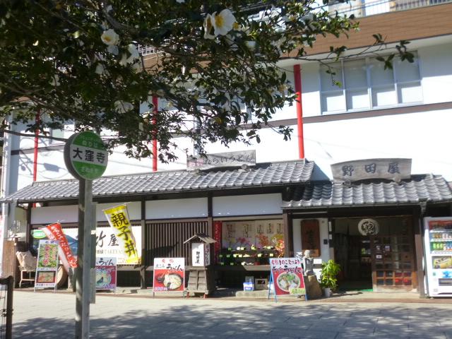 県指定の保存木 大窪寺のサザンカです