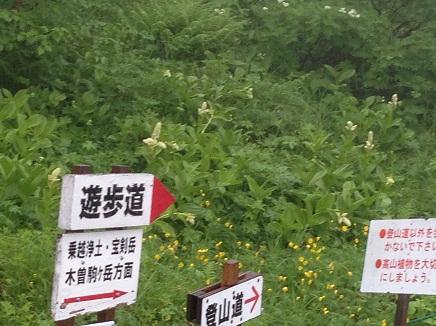 7242013信州高原旅行千畳敷S16