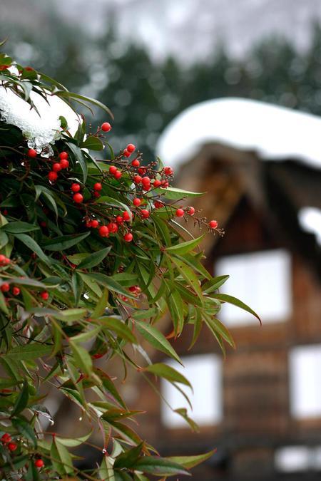 冬の世界遺産 白川郷へ遊びに行こう!!年末・年始&冬休み~白銀の白川郷へ~ ⑪