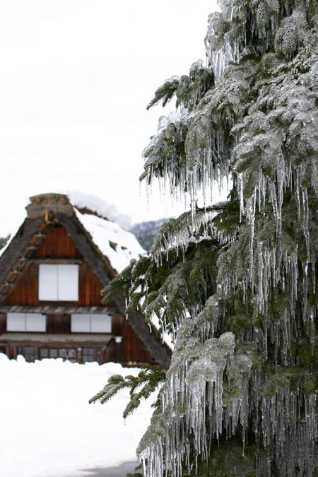 1月18日土曜日に白川郷ライトアップ開催!(白川村ライブカメラが見られない為、茅葺き屋根に雪が積もっている情報が知りたいと思いますので。。)今日の世界遺産白川郷荻町合掌集落の風景です。 ⑧