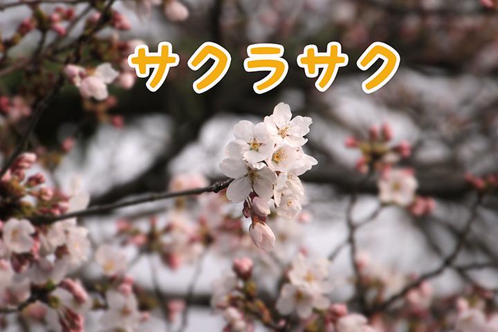 IMG_4606.jpg