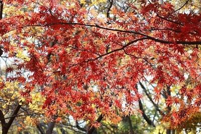 紅葉131127神代植物公園 (22)T済、S済