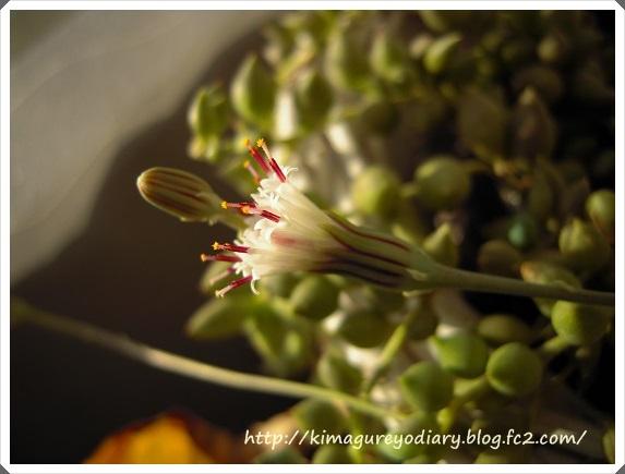 グリーンネックレスのお花2013・12月14日