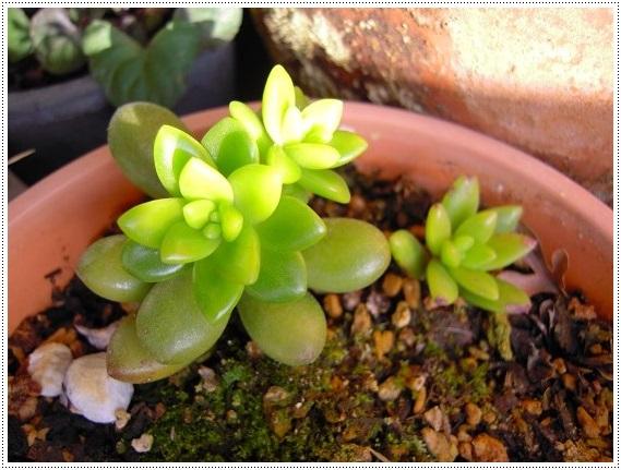 松の緑 2013・12月14日