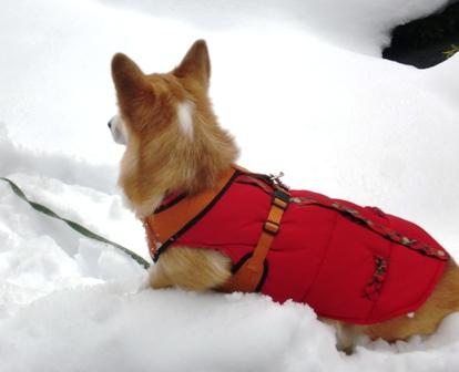 雪遊び 8