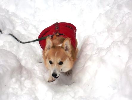 雪遊び 11