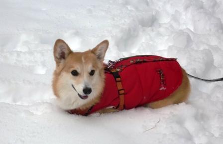 雪遊び 15