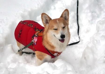 雪遊び 17