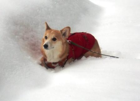 雪遊び 18