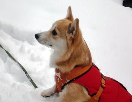 雪遊び 9