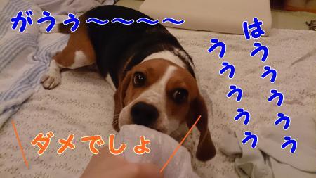 005_convert_20130617212553.jpg