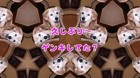 009_convert_20130615225547.jpg