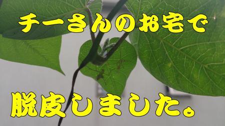 194_convert_20130614231917.jpg