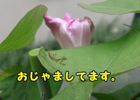 195_convert_20130614231938.jpg