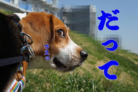 DSC01856_convert_20130704210929.jpg