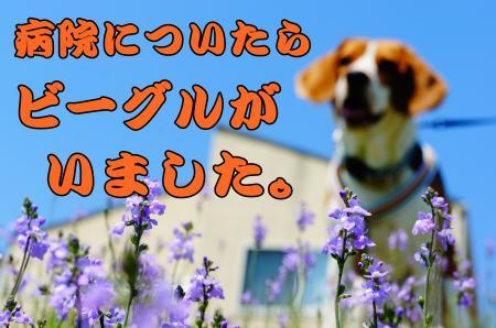 DSC02545_convert_20130426163730.jpg