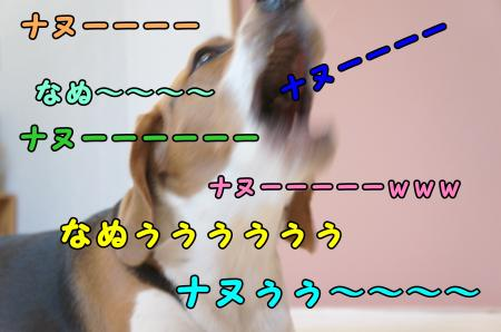 DSC02757_convert_20130517222703.jpg
