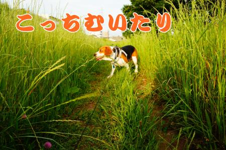 DSC02860_convert_20130527231154.jpg