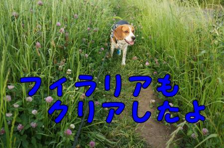 DSC02863_convert_20130520204045.jpg