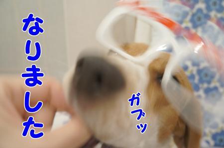 DSC03009_convert_20130727111726.jpg