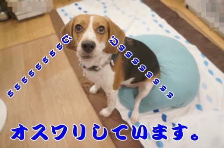 DSC03318_convert_20130729175537.jpg