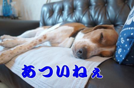 DSC03826_convert_20130814212413.jpg