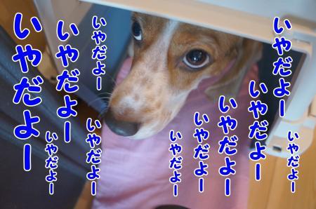 DSC03857_convert_20130816213520.jpg